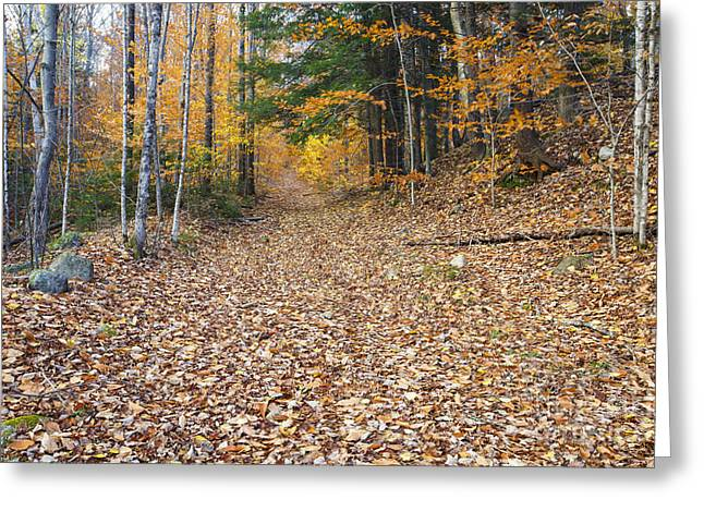 Thornton Gore Road - Thornton New Hampshire Greeting Card by Erin Paul Donovan