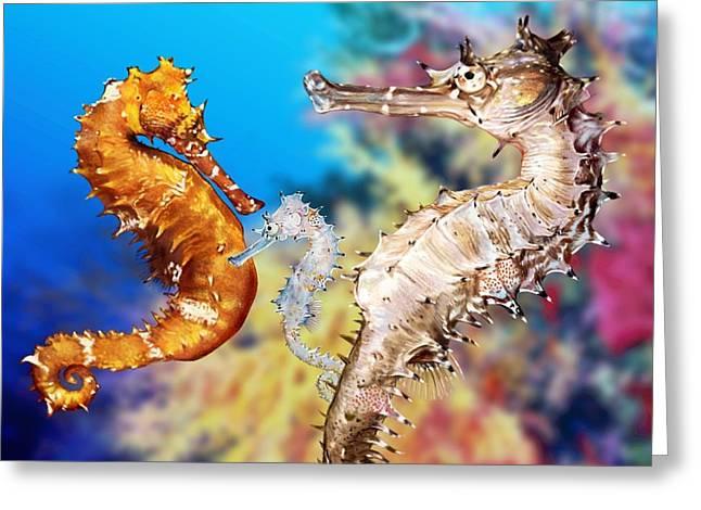 Seahorses Digital Art Greeting Cards - Thorny Seahorse Greeting Card by Owen Bell