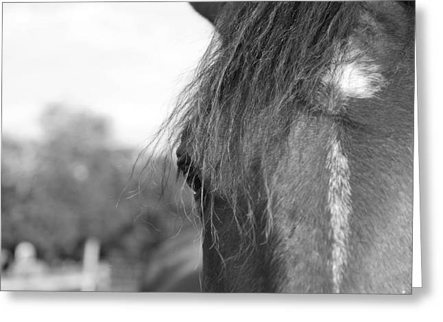 Equus Greeting Cards - Thoroughbred b/w Greeting Card by Jennifer Lyon