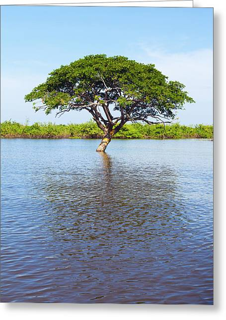 Tonle Greeting Cards - Thoroughly watered Greeting Card by Alexey Stiop