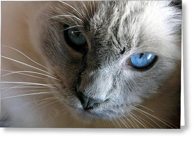 Gray Hair Greeting Cards - Those Eyes Greeting Card by Amber Nissen