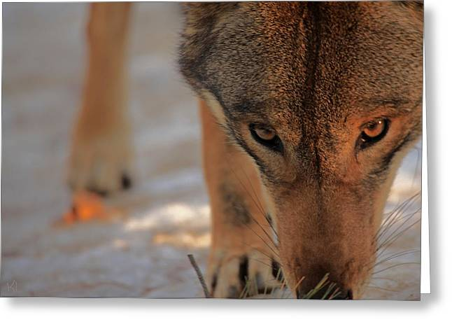 Critically Endangered Animals Greeting Cards - Those Eyes Greeting Card by Karol  Livote