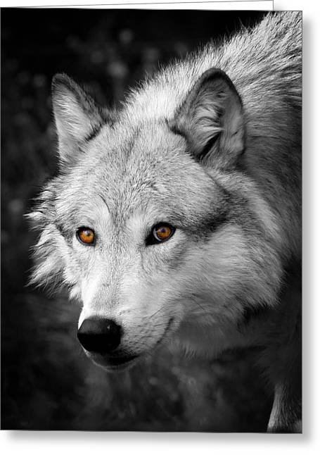 Award Winning Art Greeting Cards - Those Eyes Greeting Card by Steve McKinzie