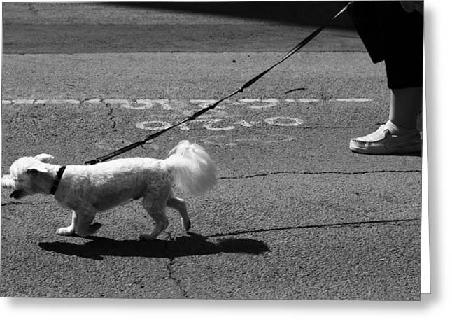 Dog Walking Photographs Greeting Cards - Those Who Will Greeting Card by Jerry Cordeiro