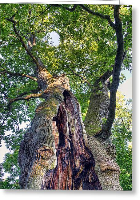 Green Greeting Cards - Thousand Year Old Oak Greeting Card by EXparte SE