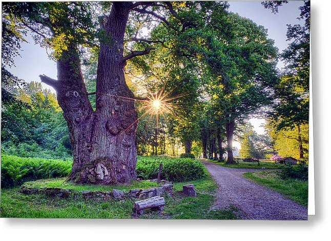 Glow Greeting Cards - Thousand Year Old Oak in the Morning Sun Greeting Card by EXparte SE
