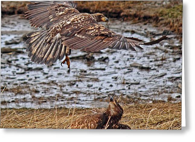 Flying Eagles Greeting Cards - Threat From Above Greeting Card by Randy Hall