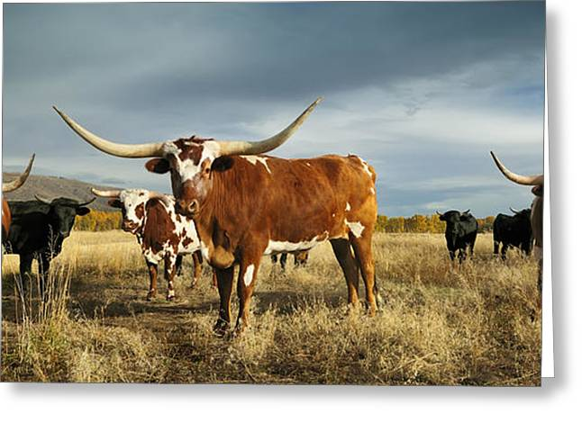 Three Amigos Greeting Card by Christopher Balmer