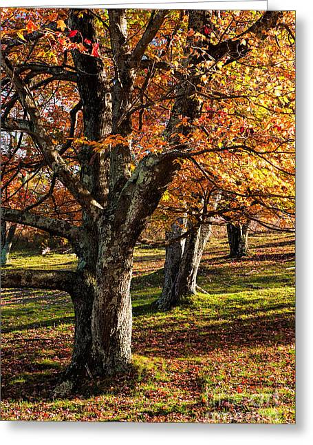 Blue Knob Mountain Greeting Cards - Three Amigos I Greeting Card by Dan Carmichael