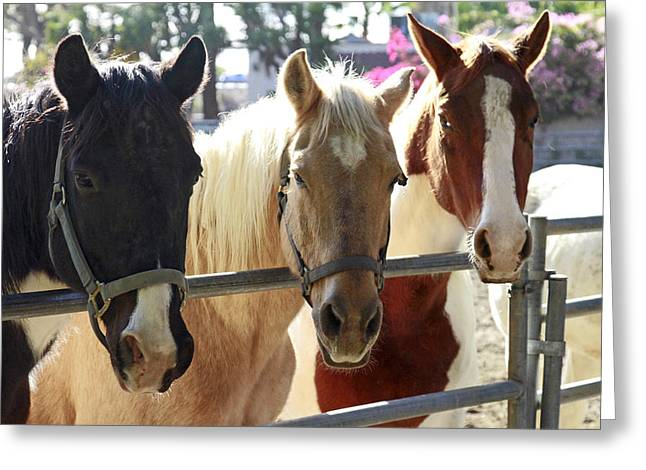Horses Pyrography Greeting Cards - Three Amigos Greeting Card by Shoal Hollingsworth