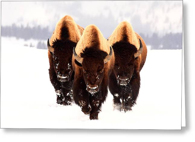 Buffalo Greeting Cards - Three Amigos Greeting Card by Steve Hinch