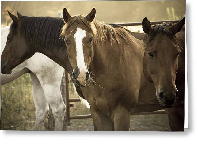 Saddle Greeting Cards - Three Amigos Greeting Card by Steven Bateson
