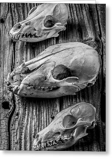 Rusty Nail Greeting Cards - Three Animal Skulls # 2 Greeting Card by Garry Gay