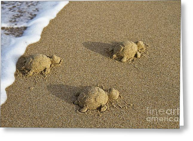 Bryan Freeman Greeting Cards - Three Baby Turtles Greeting Card by Bryan Freeman