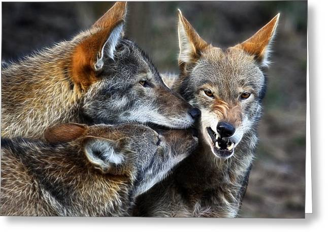 Preditor Greeting Cards - Three Bad Wolves Greeting Card by Steve McKinzie