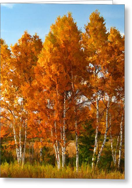 Trees In Autumn Greeting Cards - Three Birches Greeting Card by Christopher Arndt