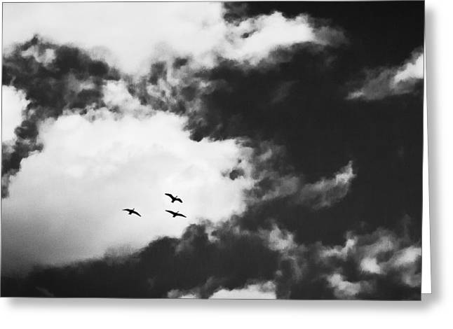Peaceful Images Greeting Cards - Three Birds Fly Over The Ocean Greeting Card by Susan Stone