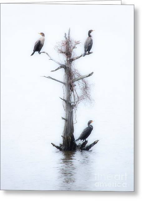 Paint Photograph Greeting Cards - Three Birds in a Tree - Outer Banks Greeting Card by Dan Carmichael
