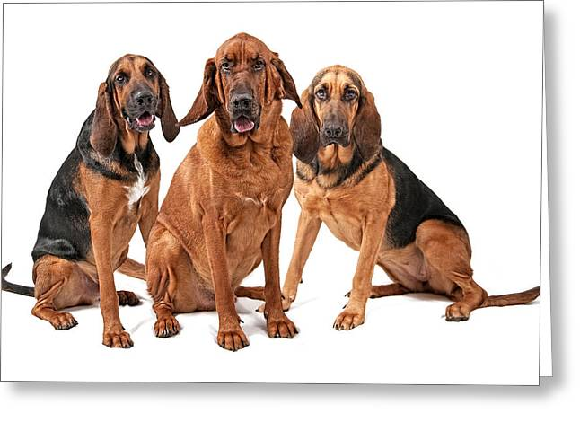 Guard Dog Greeting Cards - Three Bloodhound Dogs Isolated on White Greeting Card by Susan  Schmitz