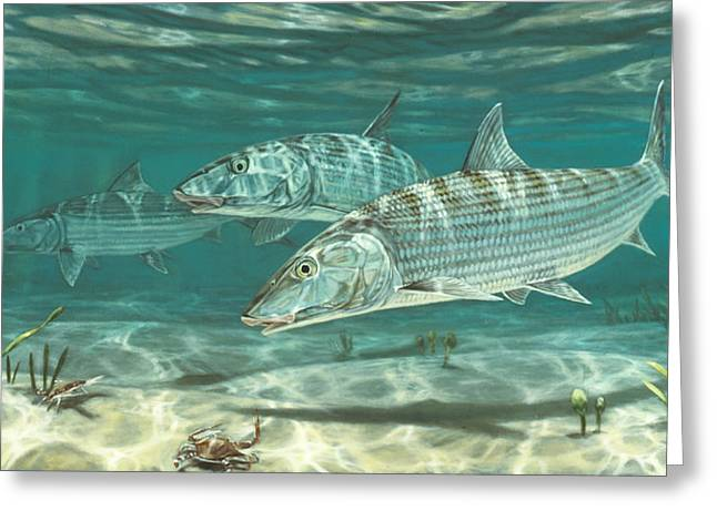 Recently Sold -  - Aquarium Fish Greeting Cards - Three Bonefish and Crabs Greeting Card by Don  Ray