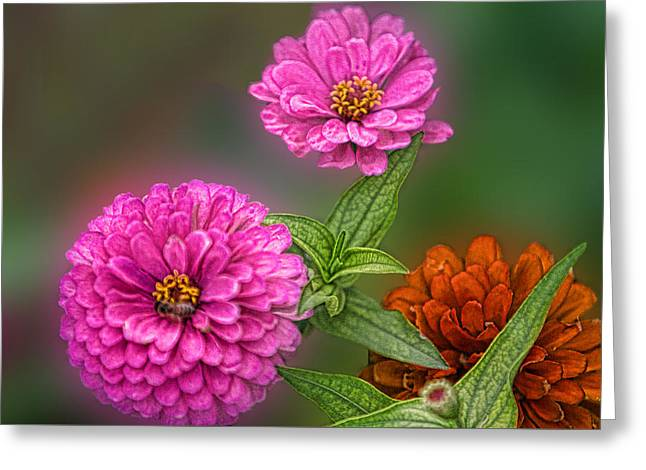 Pink Reliefs Greeting Cards - Three Can Be a Crowd Greeting Card by Linda Phelps