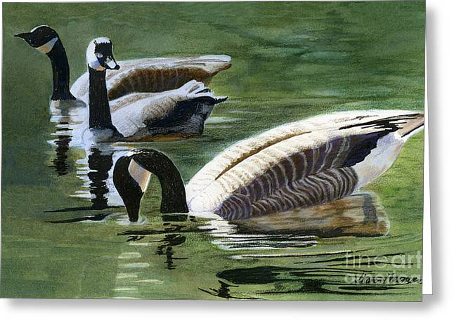 Canada Mixed Media Greeting Cards - Three Canada Geese Greeting Card by Sharon Freeman