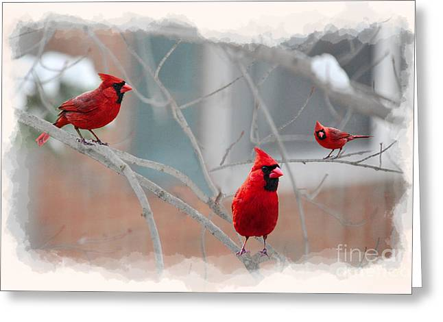 Three Cardinals In A Tree Greeting Card by Dan Friend