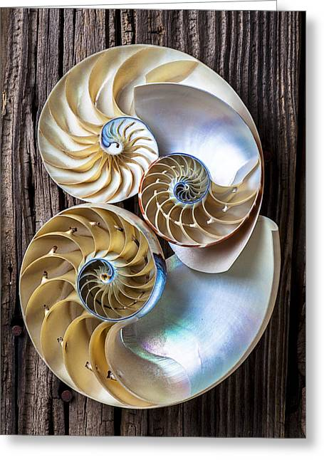 Three-colored Greeting Cards - Three chambered nautilus Greeting Card by Garry Gay