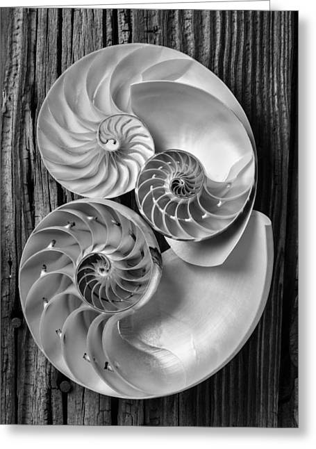 Three-colored Greeting Cards - Three chambered nautilus in black and white Greeting Card by Garry Gay