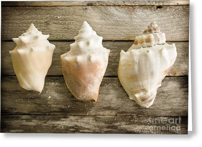 Sea Shell Art Greeting Cards - Three Conch Shells Greeting Card by Colleen Kammerer