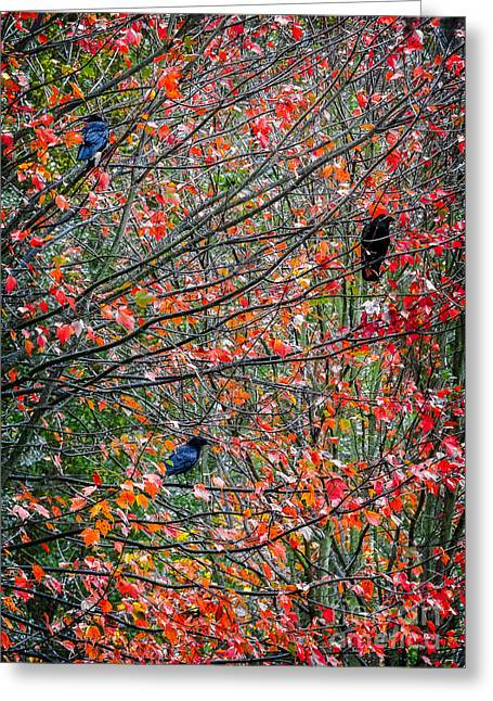 Crow. Bird Music Greeting Cards - Three Crows in a Tree Greeting Card by Ken Stanback
