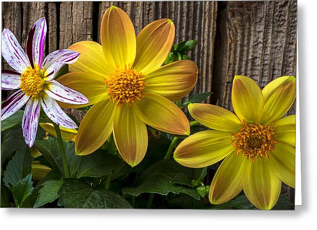 Fireworks Greeting Cards - Three Dahlias Greeting Card by Garry Gay