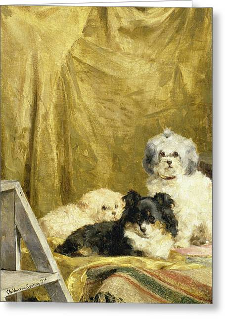 Table-cloth Greeting Cards - Three Dogs Greeting Card by Charles van den Eycken