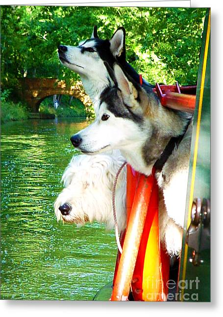 Husky Greeting Cards - Three Dogs on a Boat Greeting Card by Terri  Waters
