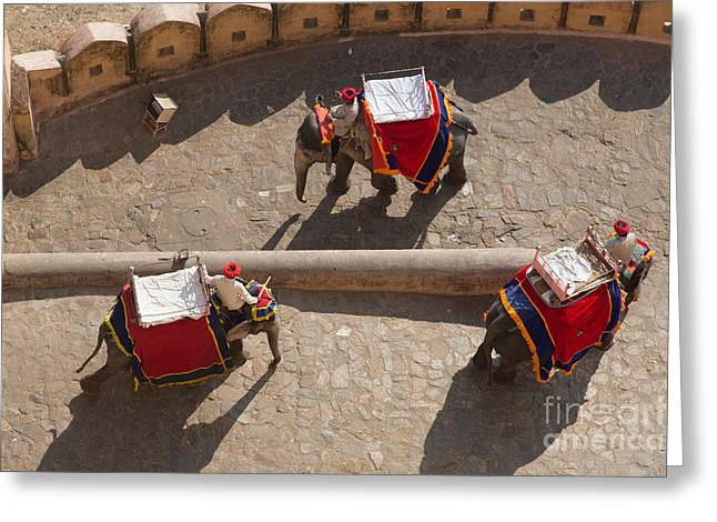 Jaipur Greeting Cards - Three Elephants at Amber Fort Greeting Card by Inge Johnsson