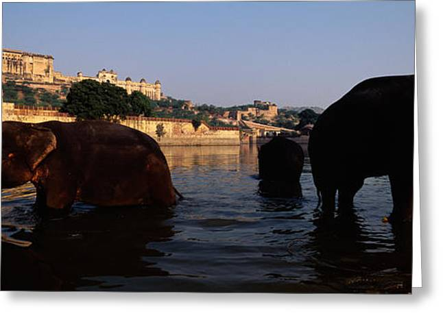 Jaipur Greeting Cards - Three Elephants In The River, Amber Greeting Card by Panoramic Images