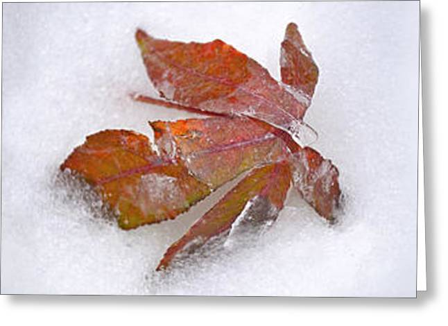 Fallen Leaf Greeting Cards - Three Fall Leaves In Snow Greeting Card by Panoramic Images