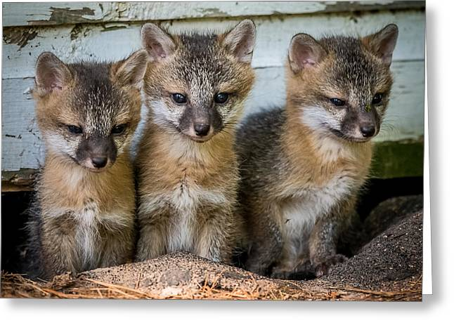 Triplets Greeting Cards - Three Fox Kits Greeting Card by Paul Freidlund