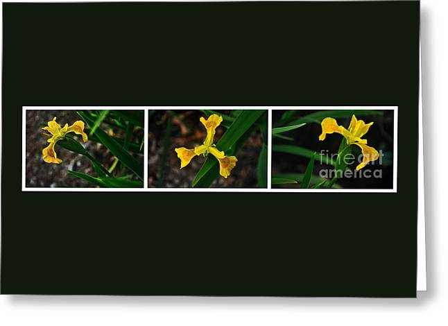 Green And Yellow Greeting Cards - Three Golden Iris - Collage Greeting Card by Kaye Menner