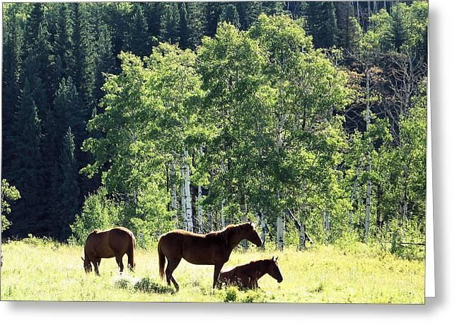 Three Horses Greeting Card by Gerry Bates