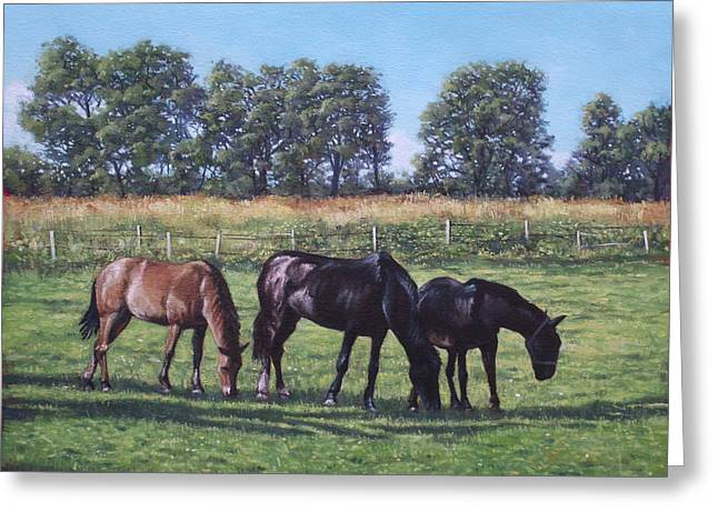 Horses In Nature Greeting Cards - Three horses in field Greeting Card by Martin Davey