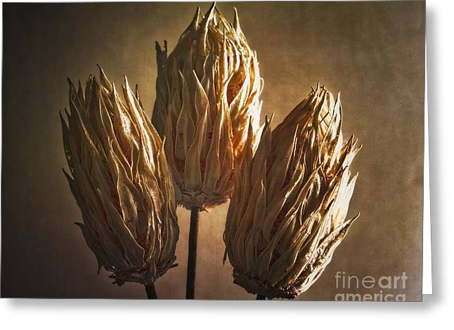Organic Forms Greeting Cards - Three Illuminated Pods  Greeting Card by George Oze