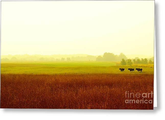 Aimelle Photography Greeting Cards - Three is not a crowd Greeting Card by Aimelle