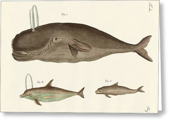 Whale Drawings Greeting Cards - Three kinds of whales Greeting Card by Splendid Art Prints