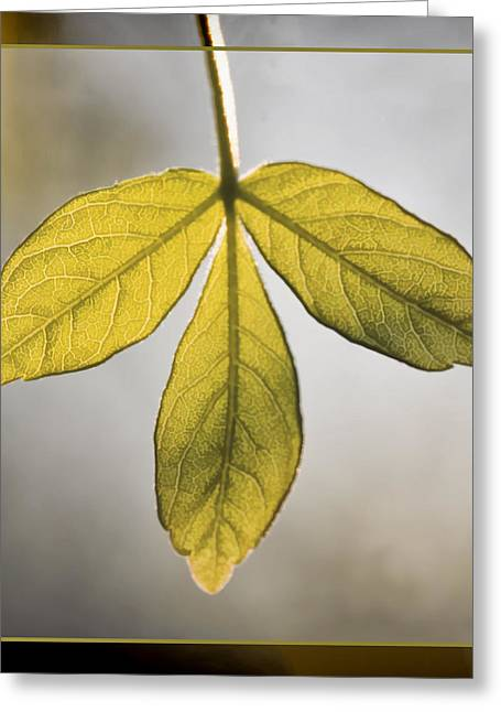 Three Leaves Greeting Cards - Three Leaves Greeting Card by Jaki Miller
