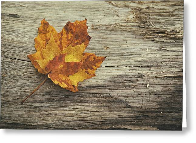 Earth Tone Photographs Greeting Cards - Three Leaves Greeting Card by Scott Norris
