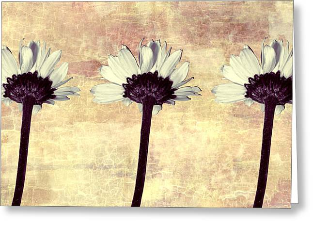 Subtle Colors Greeting Cards - Three Little Daisies Greeting Card by Shawna  Rowe