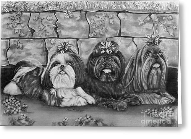 Puppies Drawings Greeting Cards - Three Little Shih Tzus Greeting Card by Lena Auxier