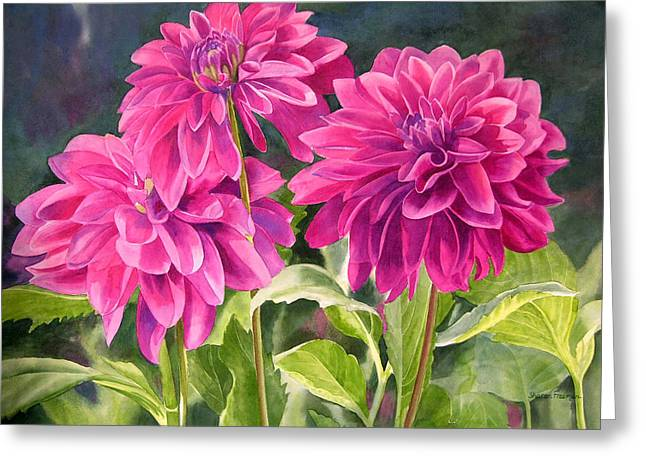 Dahlias Greeting Cards - Three Magenta Dahlias Greeting Card by Sharon Freeman