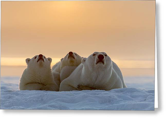 Wildlife Refuge. Greeting Cards - Three Noses Greeting Card by Tim Grams